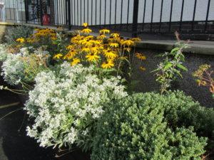 Plants outside the Centre
